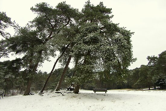 Large Trees in the Snow by ienemien