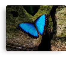 Butterfly Extraordinaire  Canvas Print