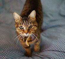Feline attention I by seanusmaximus