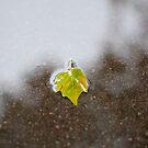 Leaf by Arissa