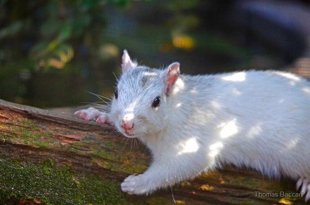 White Squirrel Hanging Out by TJ Baccari Photography