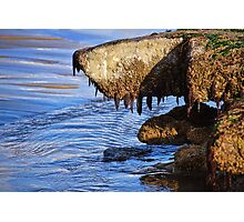Monster From The Deep? ... Or Just Another Shaggy Dog Story :) Photographic Print