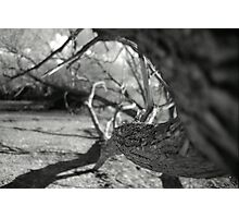 Twisting Trunk Photographic Print