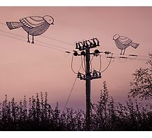 'Birds on a wire' Photographic Print