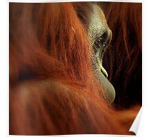 Primate Poster