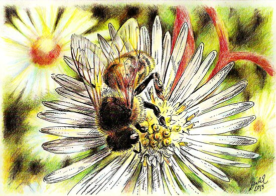 Bee on a daisy by Unicornuss