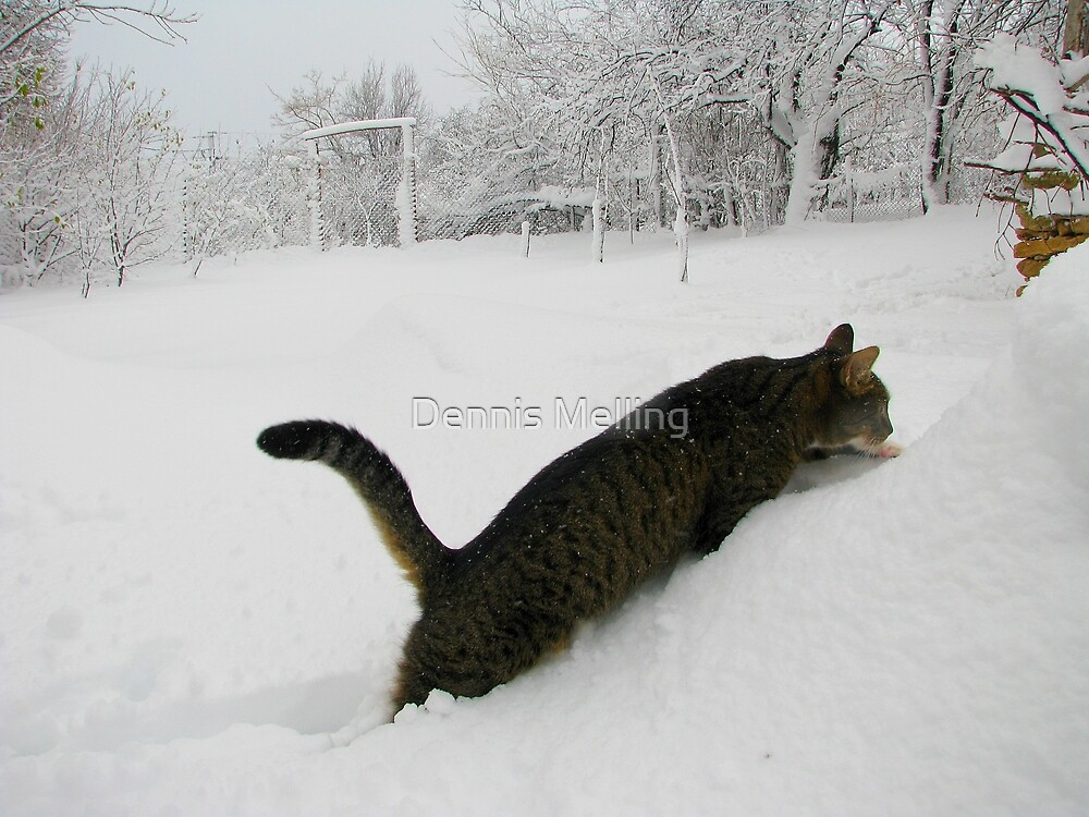 Could Someone Lend Me Some Snow Shoes by Dennis Melling