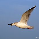 Seagull by foppe47