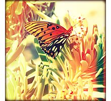 Beach Butterfly Photographic Print