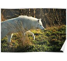 Arctic Wolf: On the Prowl Poster