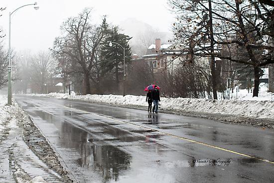 Winter Rain - Ottawa by Yannik Hay