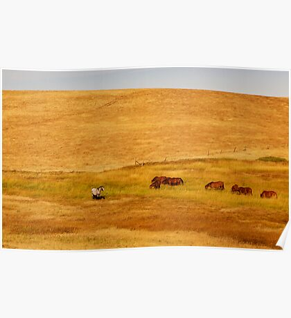 Grazing Horses in a Golden Field Poster