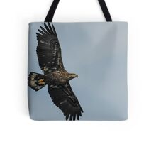 Young Eagle in Flight Tote Bag