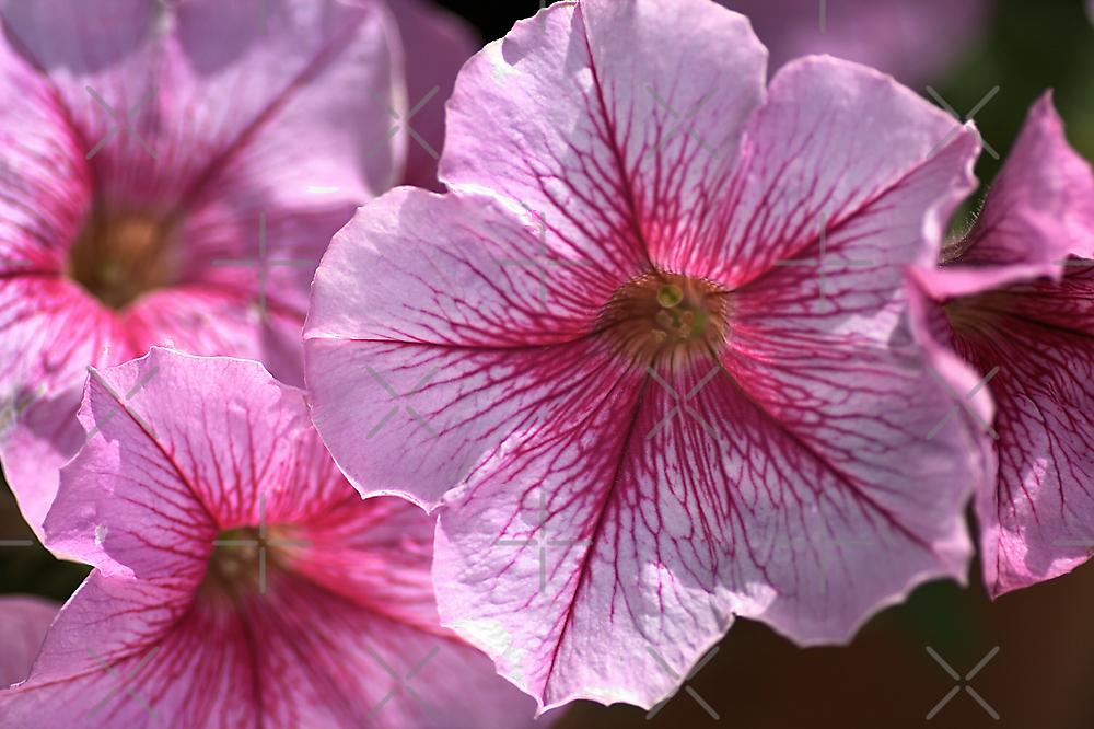 Happy in Pink by Joy Watson