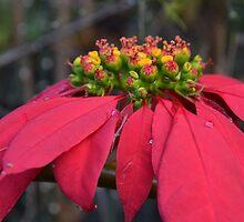 Christmas in Hawai'i by hiwalani