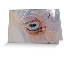 Old blue eyes Greeting Card