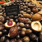 Nutmegs laid out in landscape by eugenesim