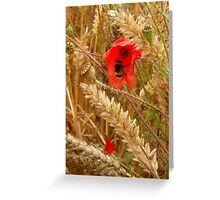 Poppy amongst the Corn Greeting Card
