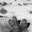 Joshua Tree VIII by davidalf