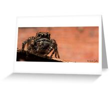 (Servaea vestita) Jumping Spider #7 Greeting Card