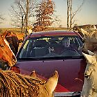 &quot;No No, Not More Horses, More Horsepower!&quot; by Melinda Stewart Page