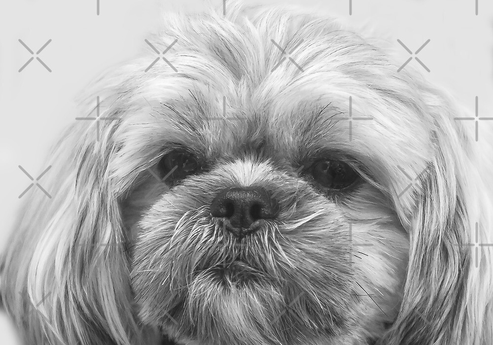 Shaggy Dog, Face to Face!  by Heather Friedman
