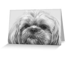 Shaggy Dog, Face to Face!  Greeting Card