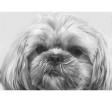 Shaggy Dog, Face to Face!  Photographic Print