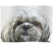A Shaggy Dog Poster