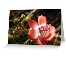 Cannonball Blossom Greeting Card