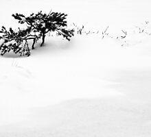 14.1.2013: Winter's Tale by Petri Volanen