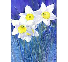 Daffies Photographic Print
