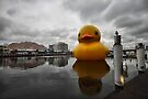 Big Duck in the City by yolanda