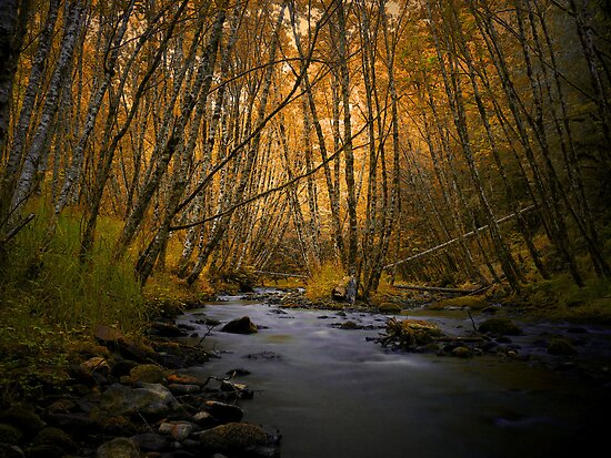 Nature Is My Medicine by Charles & Patricia   Harkins ~ Picture Oregon