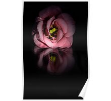 flower reflections I  Poster