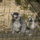 Monkeys in the Zoo by CandyBond