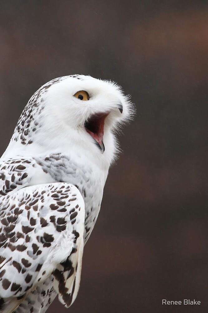 Snowy Owl Attitude ~ by Renee Blake
