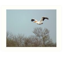 American White Pelican Flying Over Trees Art Print