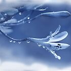 Blue Ice  (Image and Poem) by CarolM