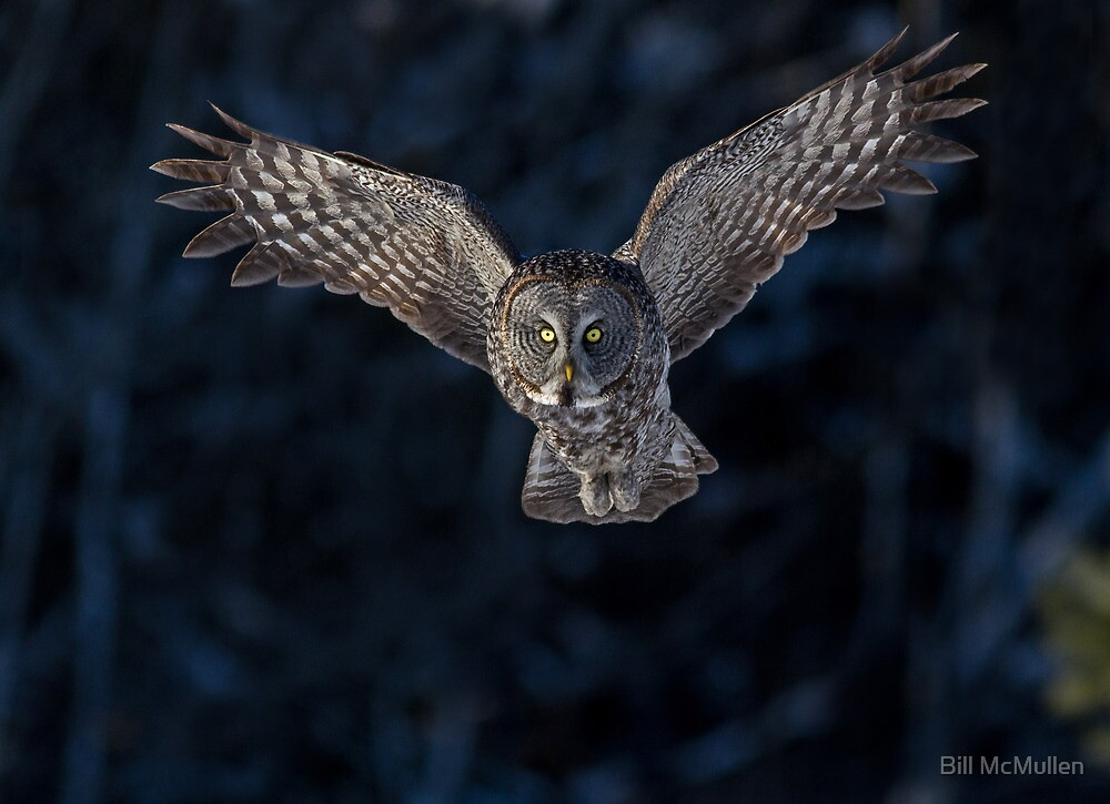 Emerging From the Darkness by Bill McMullen