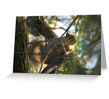 Squirrel in a Tree at Sweet Marsh  Greeting Card