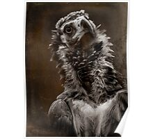 Finer Feathered Friends: Cinereous Vulture Poster