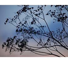 Winter twilight (1) Photographic Print