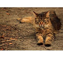 Toph, the little Lion Photographic Print