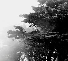 Golden Gate Park by Thomas Barker-Detwiler