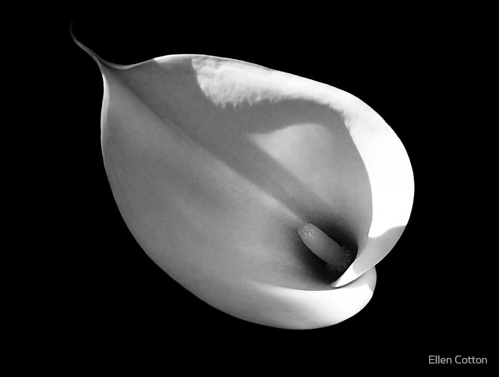 Sunlit Calla 2 by Ellen Cotton
