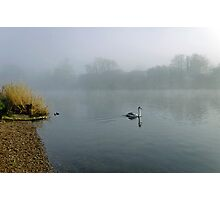 A Cygnet in the Fog Photographic Print