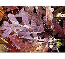 Oak Leaves On The Ground Photographic Print
