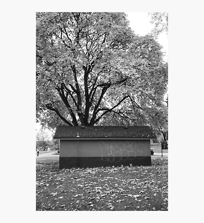 Tree at Green Lake, Seattle, Washington Photographic Print