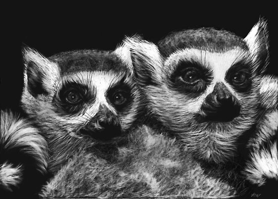 Ringtail Lemurs by Heather Ward